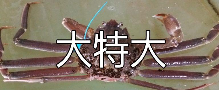 zuwaigani-daitokudai